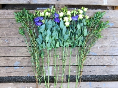 Collection Lisianthus Stems from £10